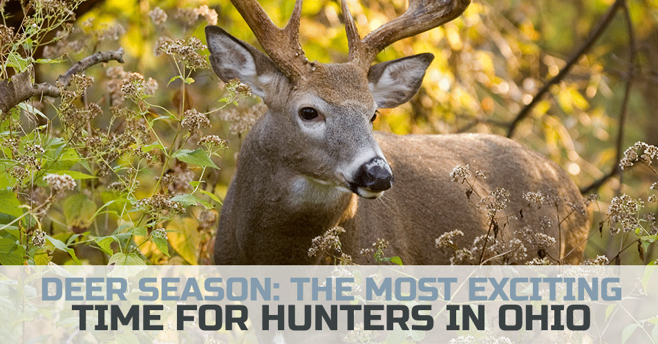 Deer Season: The Most Exciting Time for Hunters in Ohio